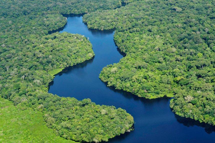 The+Amazon+Rainforest